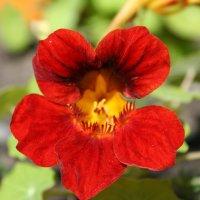 цветы :: Александр Кузьмин