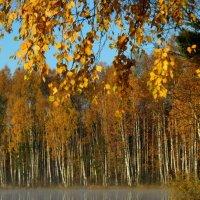 Осень на озере :: Юрий Цыплятников