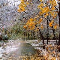 Снег выпал в октябре. :: Николай Кондаков