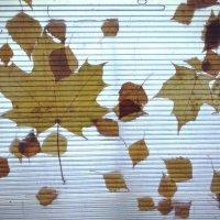 листья :: Дмитрий Потапов