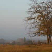 Раннее утро, туман.. :: Svetlana Larina