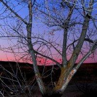 Вечернее небо :: Ирина