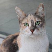 Грезы кошки :: Марина Marina