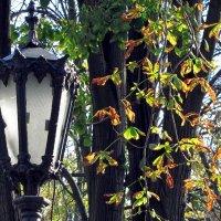 Осенний свет :: Сергей В. Комаров