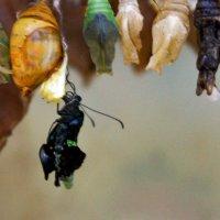 Рождённая бабочка :: Елена