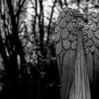 Введенское кладбище :: Yar Morgan