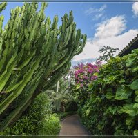 Tenerife, Loro Parque. :: Jossif Braschinsky