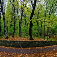 Осень в парке :: Владимир КРИВЕНКО
