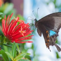 Бабочка :: Илья Шипилов