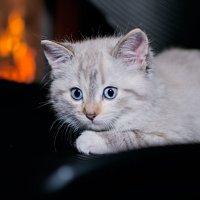 тепло в тепле :: Allika B