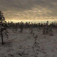 Завечерело на болоте :: Сергей