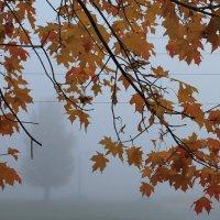 Осенние ноты :: Alena Cyargeenka