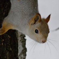 А где орешки? :: Дмитрий Яшин