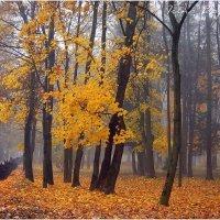 Туманы осени :: Ирина Бажанская