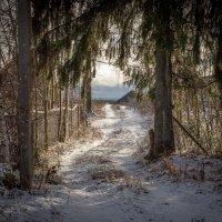 Дорога в зиму :: Игорь Хохлов