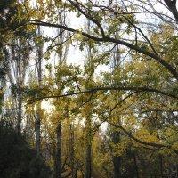 Осень... :: Мадина Девеева