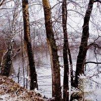 В ожидании зимы.... :: Светлана Игнатьева
