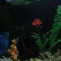 Рыбки спят :: Юрий Гайворонский