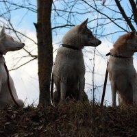 Три девицы :: Валентина Ломакина