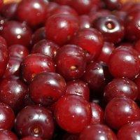 ягодки для настойки :: Дмитрий Смирнов