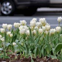 Городские цветы.... :: Елизавета Вавилова