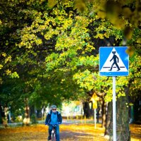Берегись велосипеда! :: Николай Ахе