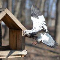 Белый голубь :: Любовь Б