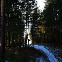 Вечер в лесу. :: Владимир Михайлович Дадочкин