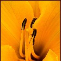 пестики,тычинки :: ник. петрович земцов