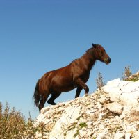 в горах :: Nastya L