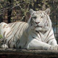 В Новосибирском Зоопарке :: Федор Ушаков