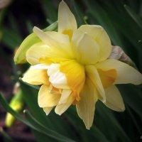 Из весны :: Юрий
