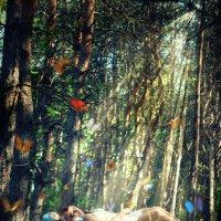Butterflies :: Artem Levenets