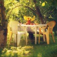 Немного солнца  и тепла. :: Елена Kазак