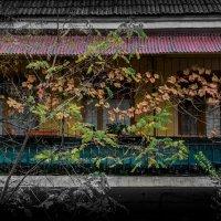 осень на балконе :: Sergey Bagach