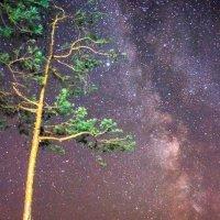 Звездная ночь :: Павел Меньшиков