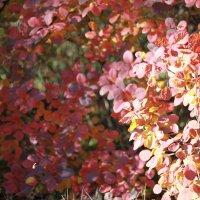 Осенние краски :: Светлана М