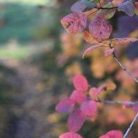 Magic of autumn.... :: Светлана М