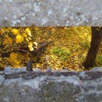 подглядывая за осенью... :: Светлана М
