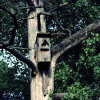 Птицы здесь больше не живут :: Vyacheslav Slavnov