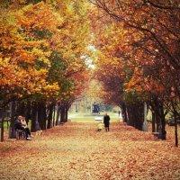 Осенний парк :: Ігор Пилипенко
