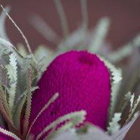 Плюшевые цветы :: Анна Уварова