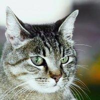Люся-из серии Кошки очарование мое! :: Shmual Hava Retro