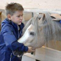 Каждому ребёнку по своей лошадки :: kirm2 .