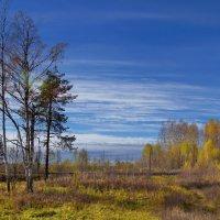 последние краски осени :: gribushko грибушко Николай