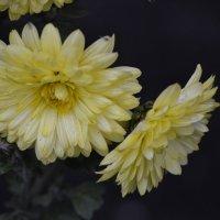 Цветы :: Надежда Абрамова