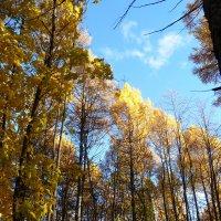 Осенний лес. :: НАДЕЖДА КЛАДЧИХИНА