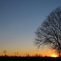 Поле, дерево, закат :: Андрей Тихомиров