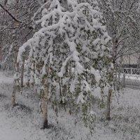 Последний снег :: Владимир Сороколит