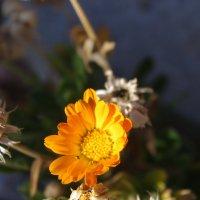 Осенью и цветы :: İsmail Arda arda